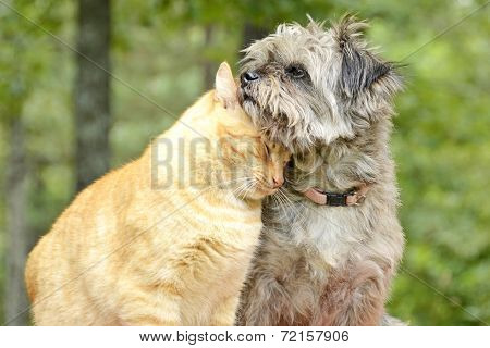 Cat and Dog Snuggle Closely in Forest