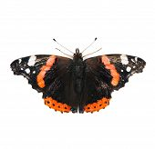 Red Admiral butterfly isolated on white background poster