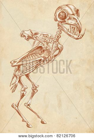 Illustration of a series of legendary animals and monsters (skeleton): HARPY. An hand drawn and painted full sized illustration (Original). Version: Drawing on old paper. poster