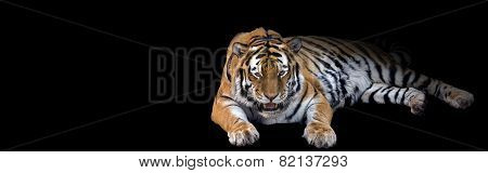 banner of a growling tiger