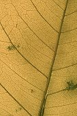 leaf texture poster
