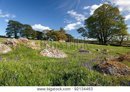 Emsworthy Mire On Dartmoor