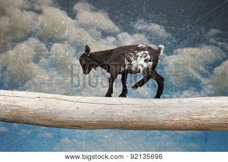 Goat Kid Walking With Courage On Tree Clog