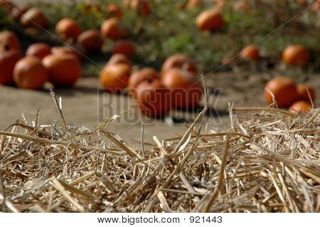 Pumpkins -2