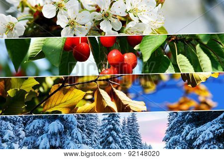 Four Season Collage - Horizontal Banners