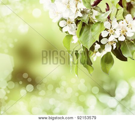 Leaves And Bird-cherry Tree Over Sky