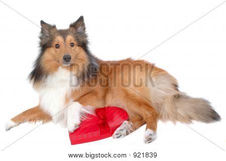 Cute Valentine Day Dog