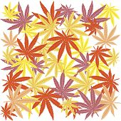 Seamless with colored marijuana leaves on white bakground poster