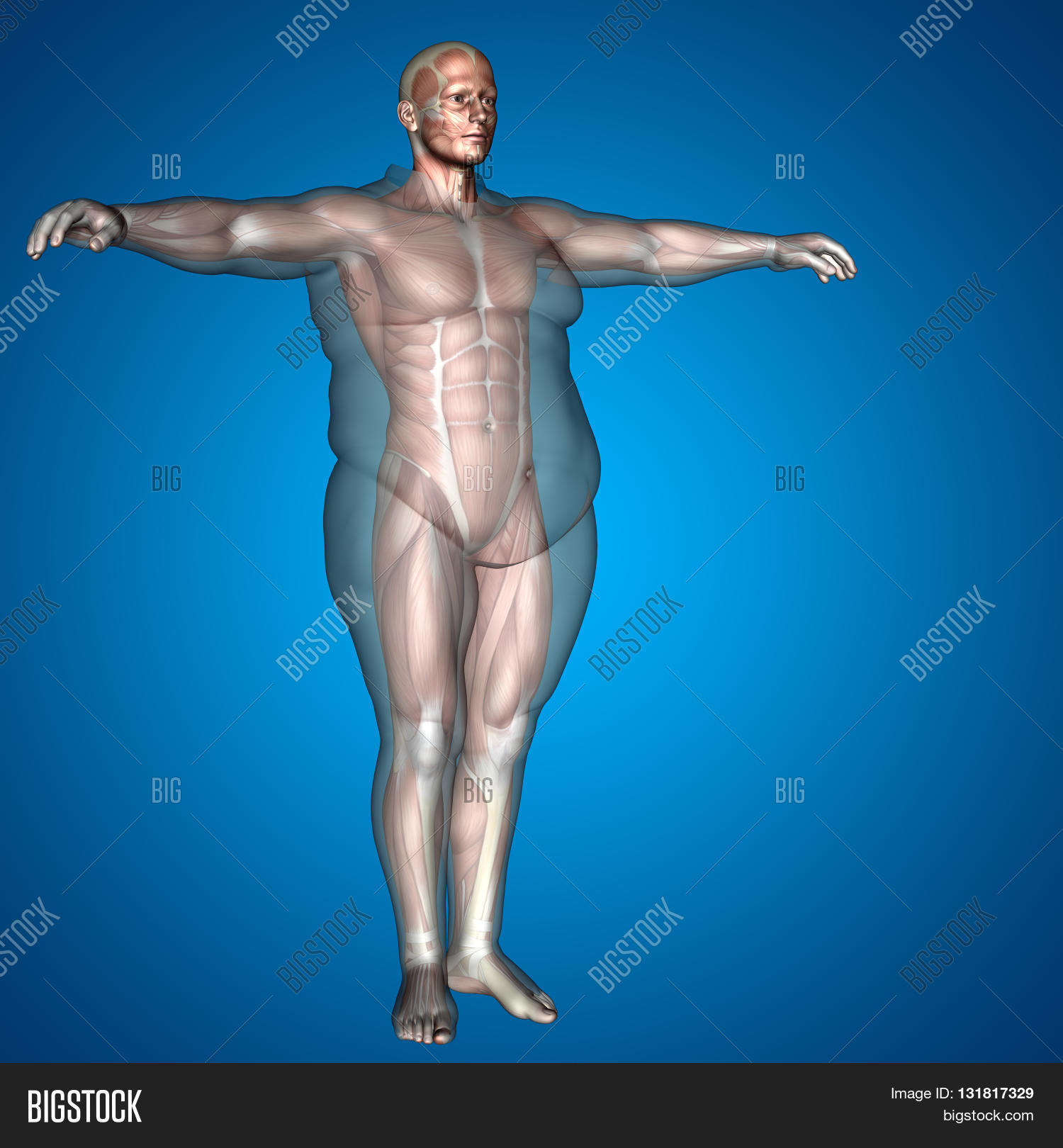6f437b9accf Concept, conceptual 3D illustration fat overweight vs slim fit diet with  muscles young man blue