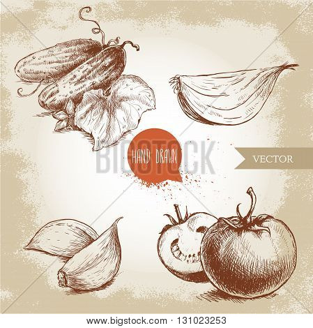 Set of hand drawn vegetables. Ripe tomatoes onion slice cucumbers with leaf and garlic. Sketch style eco food illustration.