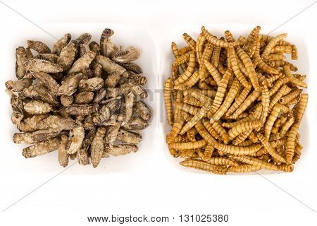 Fried crickets locust molitor insects, in white plate