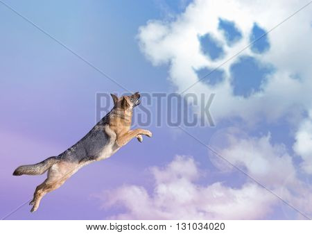 cute dog jumping in the sky clouds