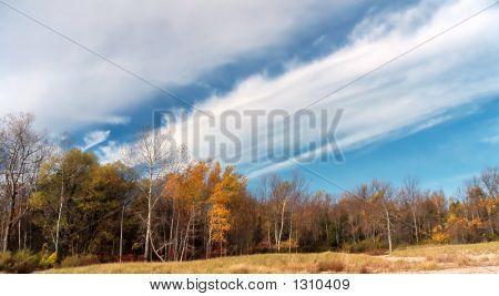 Late Autumn Colors