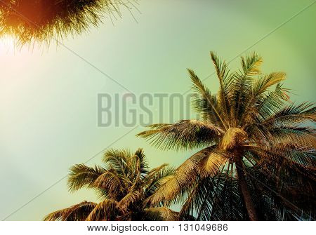 tropical background with palm trees with patches of sunlight (vintage noise)