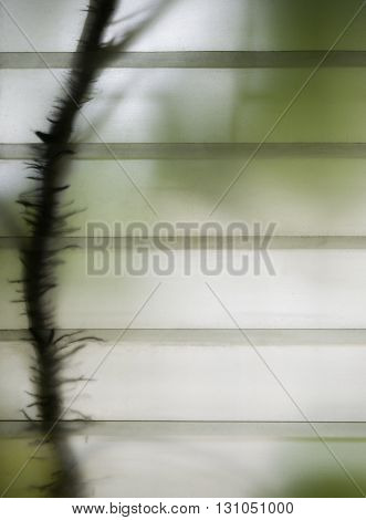 Body and root of green plant that growing behind thin glass window.