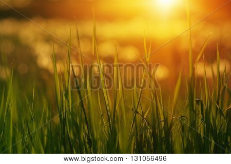 Green grass background with sun beam. Bright natural bokeh. Soft focus.