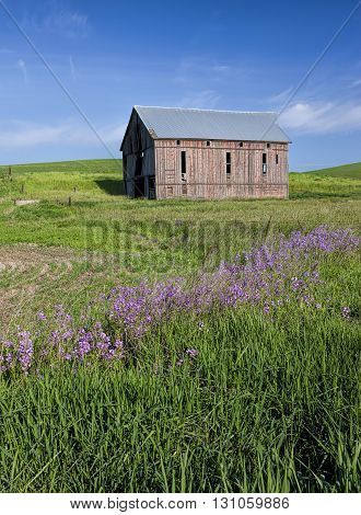 Wild flowers leading to old barn. An old barn in a green field in the palouse region of eastern Washington.