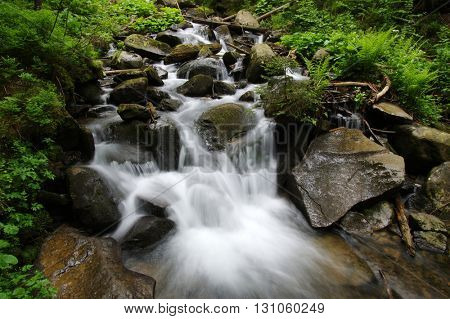 Stream in the green wood
