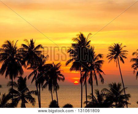 Bay View Coconut Horizon