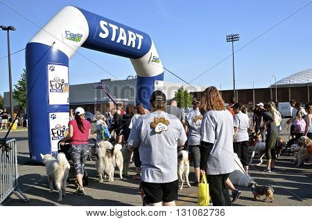 FARGO, NORTH DAKOTA-May 16, 2016: Dogs and trainer/owners wait for the Furgo dog race which is ready to start at the annual Fargo Marathon which also includes a cyclothon, youth, 5K, 10K,half and full runs.