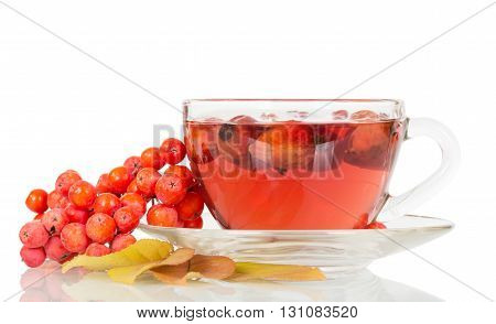 Rowan berries and rosehip tea cup isolated on white background.
