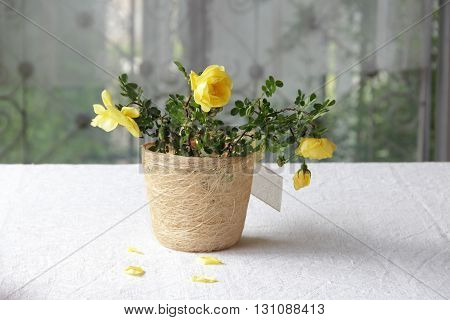 a bouquet of yellow roses in decorative pot