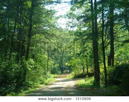 Rocky Forest Road