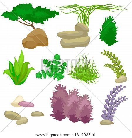 Different kinds of algae and pebbles set isolated on white vector illustration