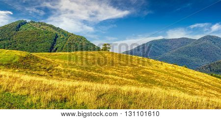 summer counrtyside landscape with lonely tree on meadow in mountains