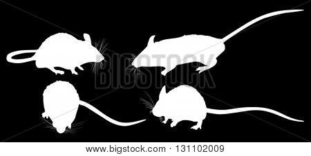 illustration with set of mouses isolated on black background