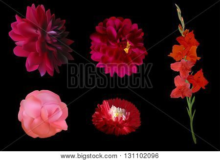 illustration with set of five red flowers isolated on black background