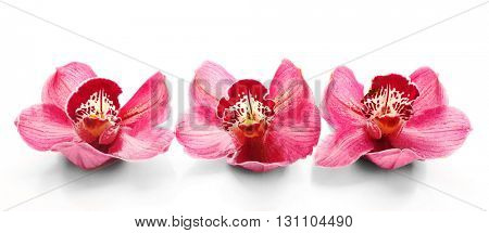 Beautiful pink orchids on white background