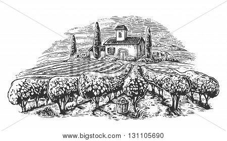 Rural landscape with villa vineyard fields and hills. Black and white drawn vintage vector illustration for label poster.