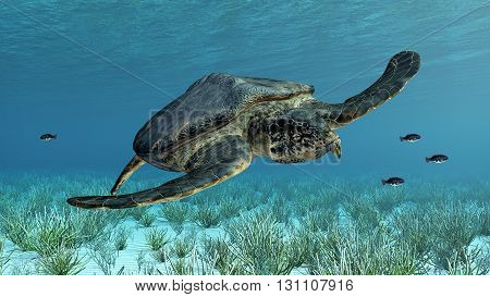 Computer generated 3D illustration with the extinct giant sea turtle Archelon poster