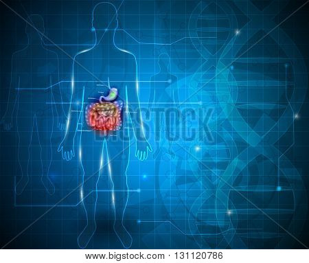 Bowels and stomach abstract blue scientific background