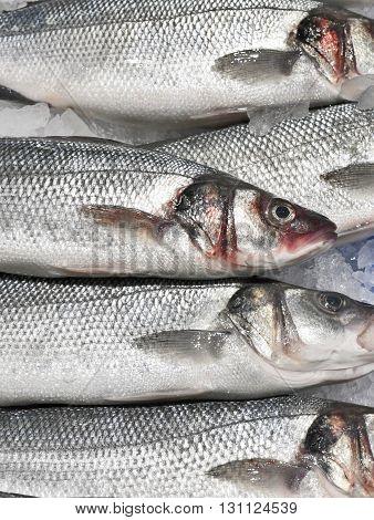 Fresh sea basses on ice. Fresh fish on a fish market stall.