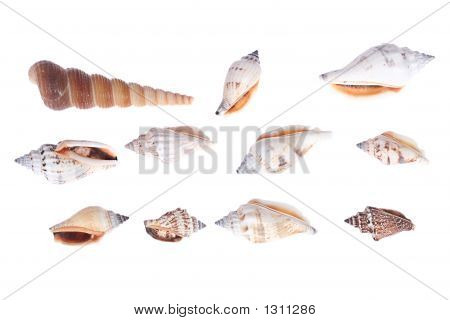 collection of sea shells isolated on white background poster