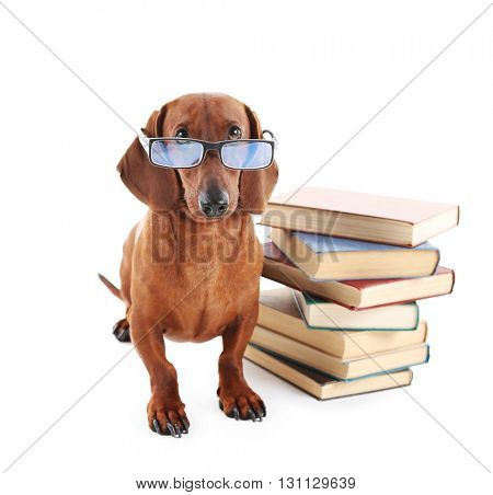 Dachshund in glasses with a stack of books isolated on white.