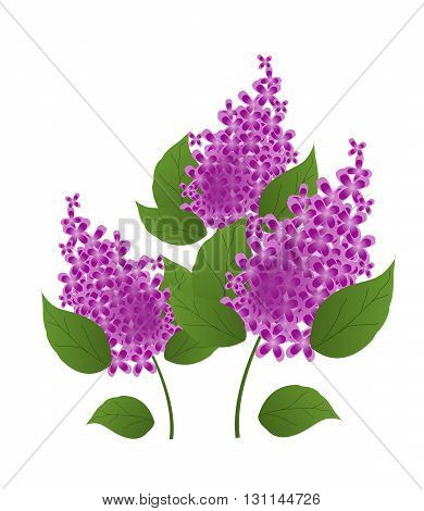 Modern illustration of purple lilac flower isolated
