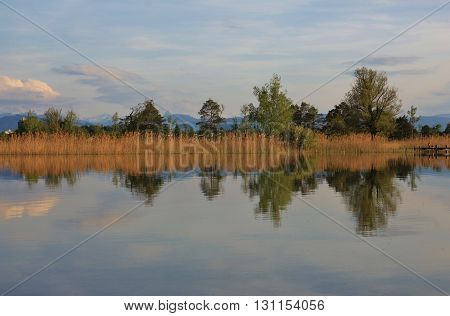 Evening scene at Lake Pfaeffikon. Trees mirroring in the water. Landscape in Zurich Canton Switzerland.