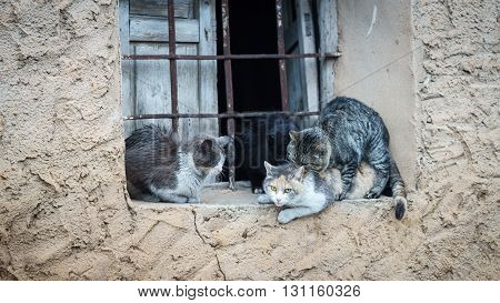 Window with domestic cats in the act of mating