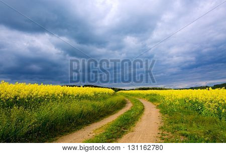 Field of flowering rape against the gray sky and clouds.  Road through the meadow.Road lane and deep sky.