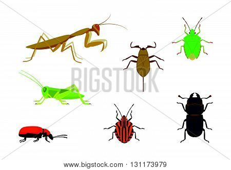 set of icons of insects common in Europe, such as praying mantis, grasshopper, lesser stag beetle, green shield bug, minstrel bug, water scorpion and scarlet lily beetle
