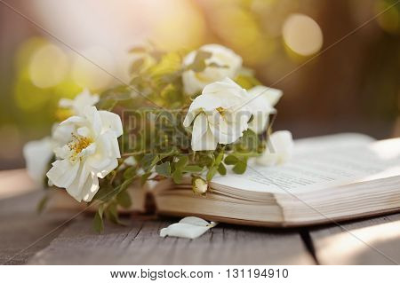 Branch of a dogrose lies on the open book on a wooden table.