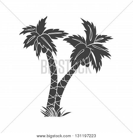 Palm. Palm vector. Palm eps. Palm icon Palm logo. Palm art. Palm web. Palm tall. Palm big. Palm ui. Palm flat. Palm isolated. Palm black. Palm picture. Palm silhouette. Palm tree. Palm sign. Palm www.