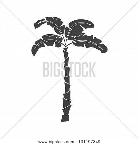 Banana tree. Banana tree vector. Banana tree eps. Banana tree icon Banana tree logo. Banana tree art. Banana tree web. Banana tree tall. Banana tree big. Banana tree ui. Banana tree flat. Banana tree isolated. Banana tree web.