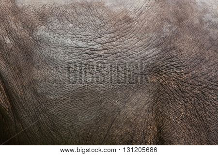 Indian elephant (Elephas maximus indicus). Skin texture. Wildlife animal.