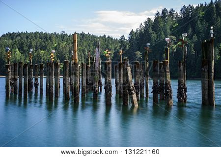 Bird Houses atop cement pilings at Tod Inlet near Victoria, British Columbia, Canada