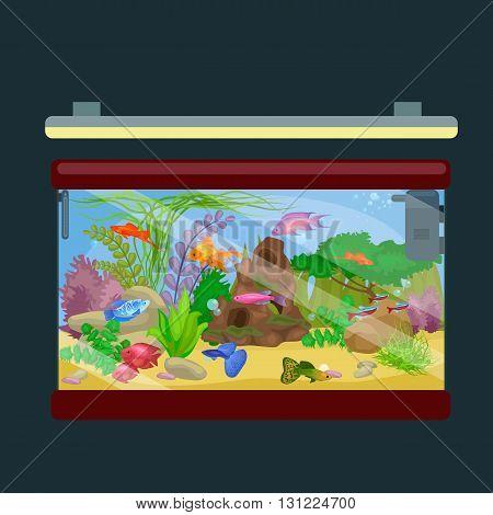 Aquarium fish, seaweed underwater, tank isolated on dark background vector illustration