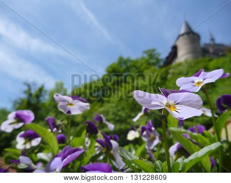 Potted Colorful Flowers With Castle Karlstejn Tower In Background